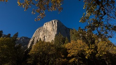 Looking up at the face of Yosemite's El Capitan mountain, with golden fall trees at its base.