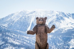 bear with snow capped mountains in the background