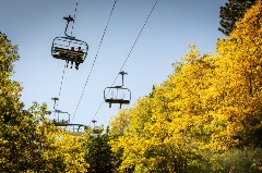 fall leaves, yellow color, people riding the scenic sky chair