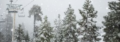 snowy pine trees with chairlifts